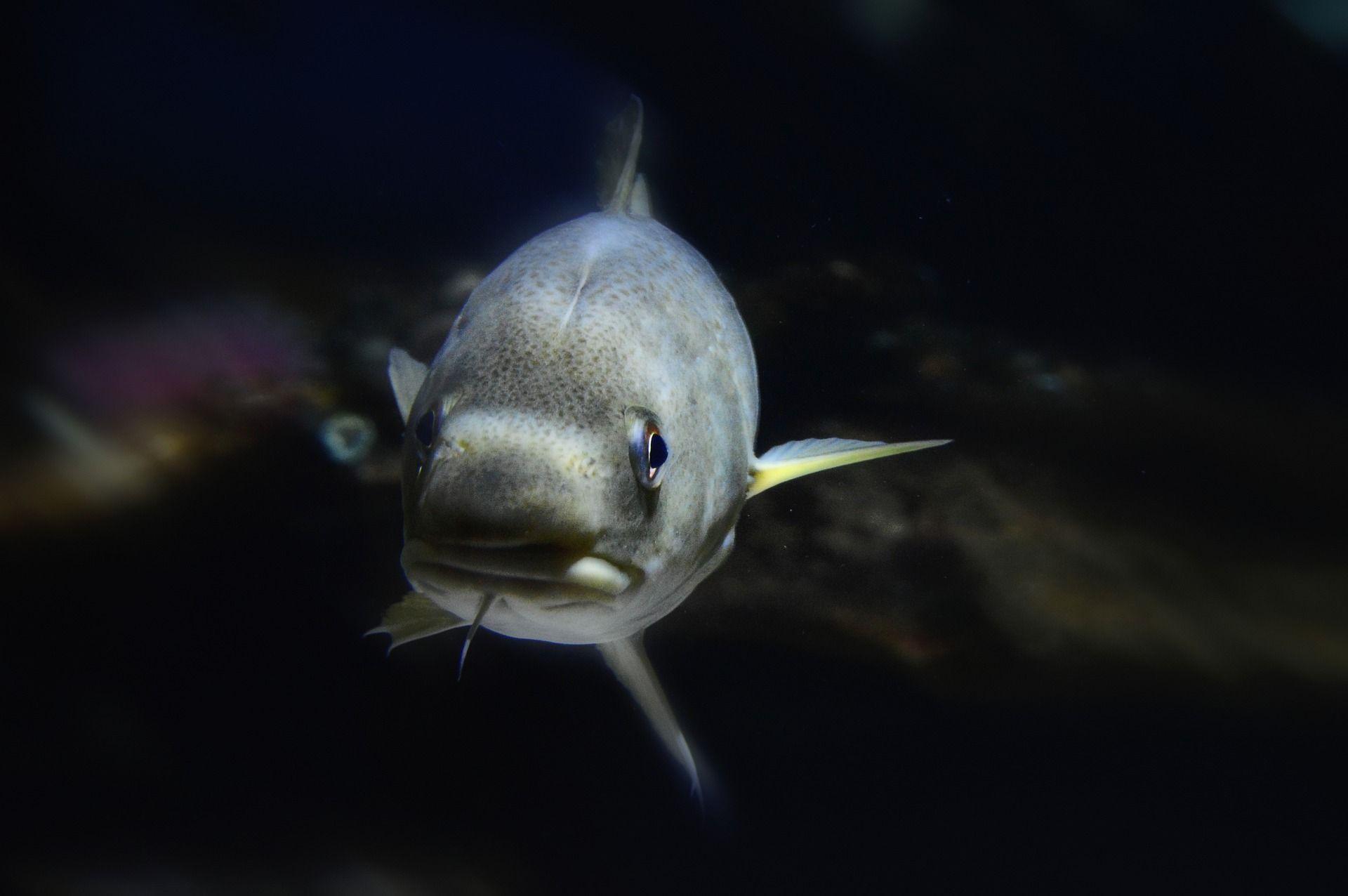 pescado y bacalao desalado