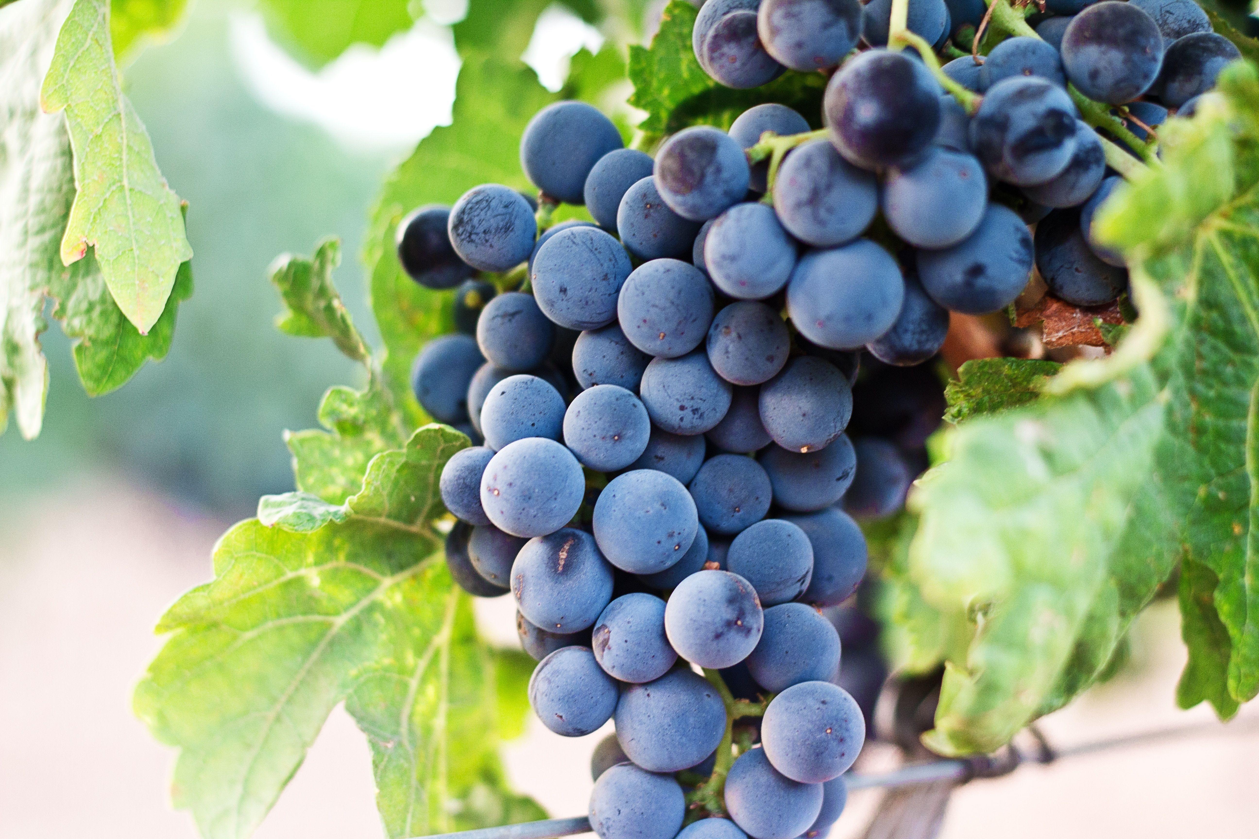vinos-ribera-del-duero