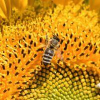 Beneficios de la miel en nuestro organismo